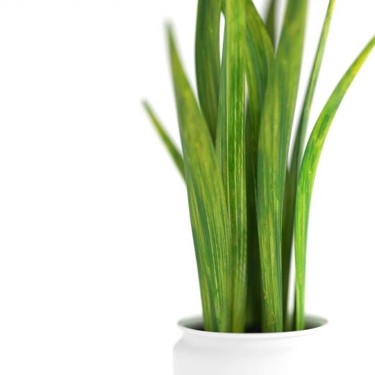 chocofur blender 3D model Flowers Flowers 27