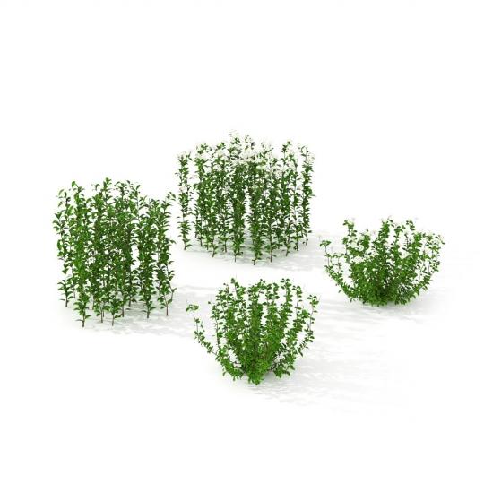 chocofur blender 3D model Grass Grass_10