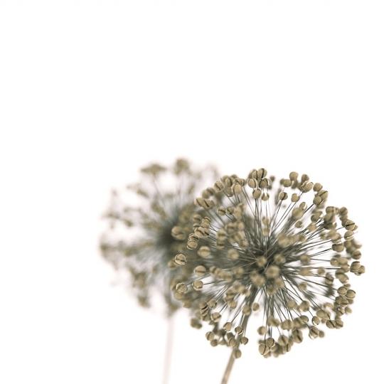 chocofur blender 3D model Flowers Flowers 09