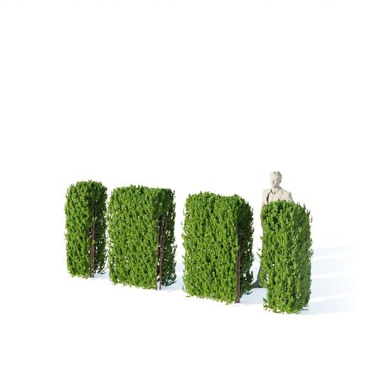 chocofur blender 3D model Bushes Bush Hedge 02