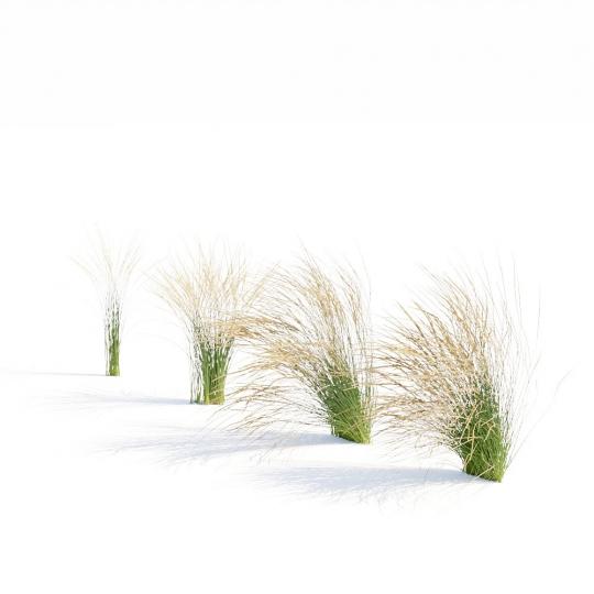 chocofur blender 3D model Grass Grass_15