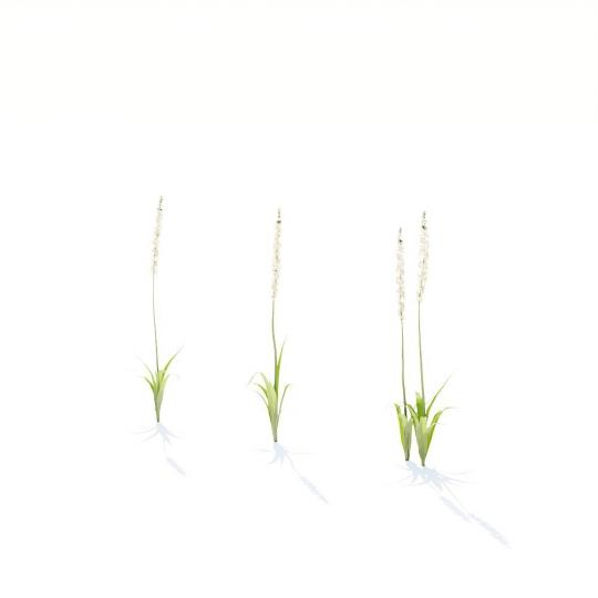 chocofur blender 3D model Grass Grass_12