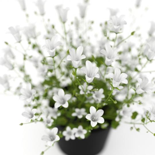 chocofur blender 3D model Flowers Flowers 11