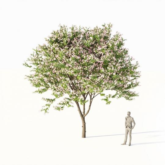 chocofur blender 3D model Trees Broadleaf Chocofur Tree Cherry Large 01