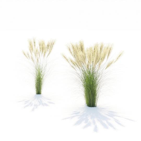 chocofur blender 3D model Grass Grass_16