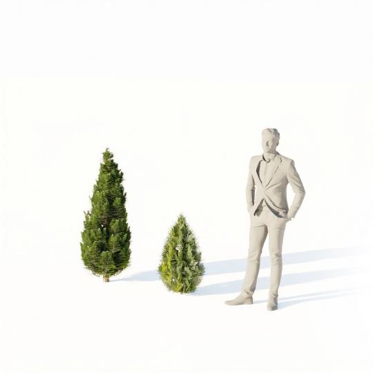 chocofur blender 3D model Bushes Bush Thuja Small 01