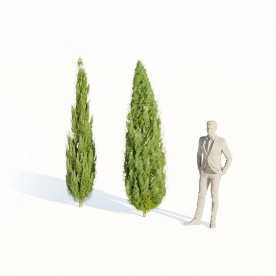 chocofur blender 3D model Bushes Bush Thuja Medium 01