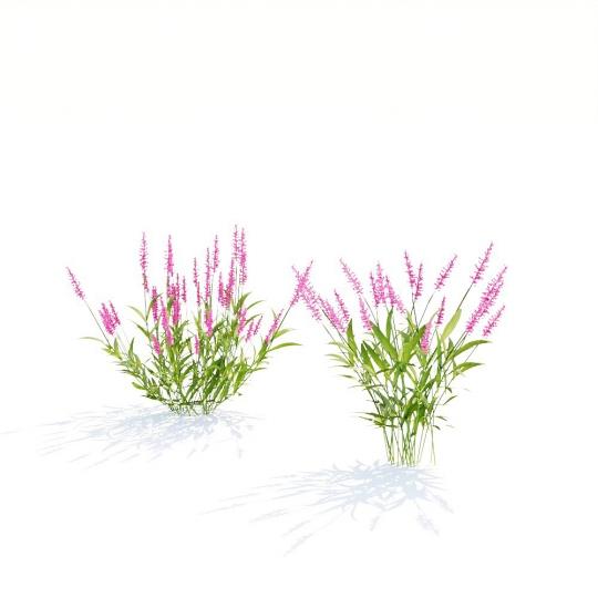 chocofur blender 3D model Grass Grass_14