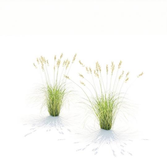 chocofur blender 3D model Grass Grass_18
