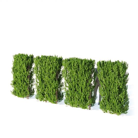 chocofur blender 3D model Bushes Bush Hedge 03