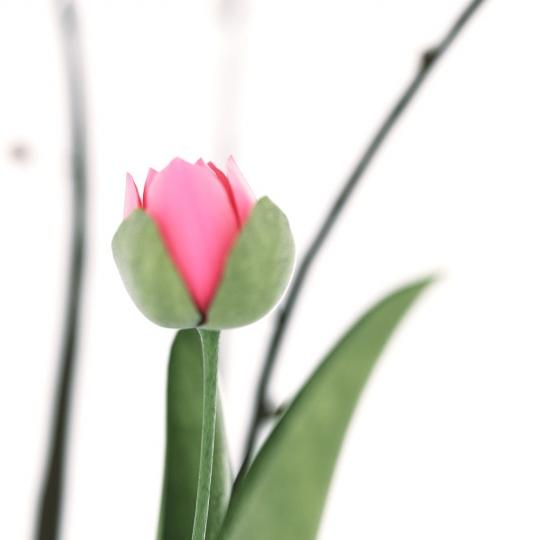 chocofur blender 3D model Flowers Flowers 10