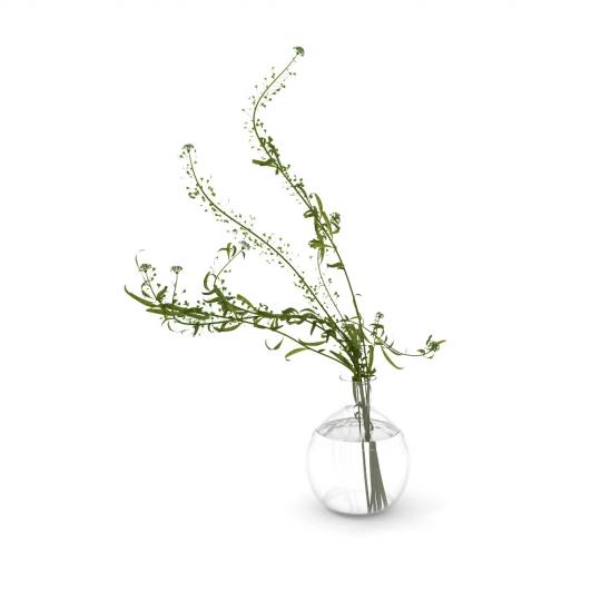chocofur blender 3D model Flowers Flowers 14
