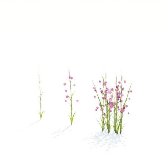 chocofur blender 3D model Grass Grass_13