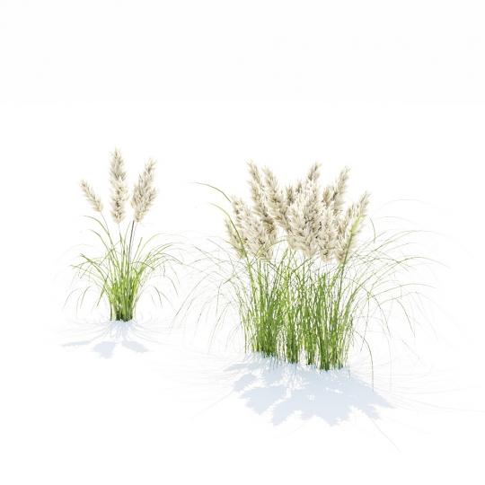 chocofur blender 3D model Grass Grass_20