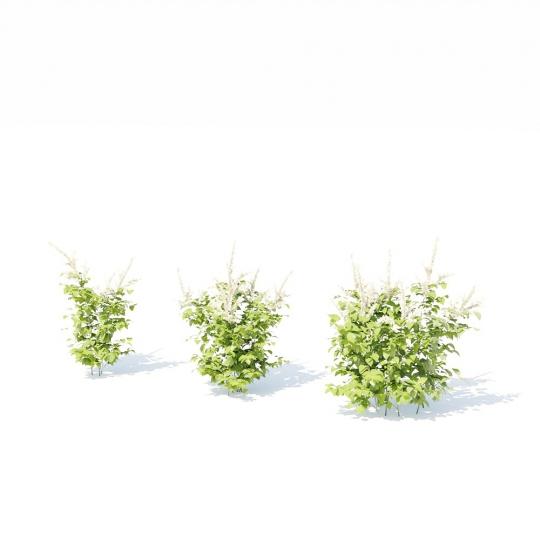 chocofur blender 3D model Grass Grass_11