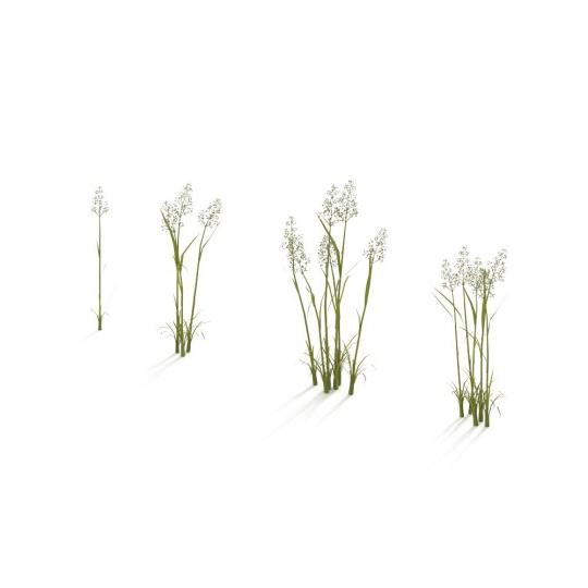 chocofur blender 3D model Grass Grass_07