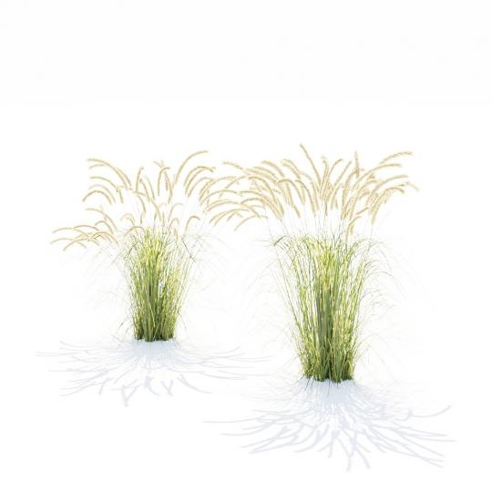 chocofur blender 3D model Grass Grass_19