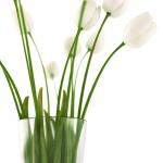 chocofur blender 3D model Flowers Flowers 03