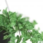 chocofur blender 3D model Flowers Flowers 31