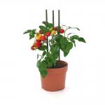 chocofur blender 3D model Flowers Flowers 22