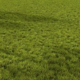 chocofur blender 3D model Grass Grass_02